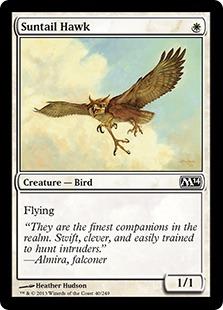Suntail Hawk [M14]