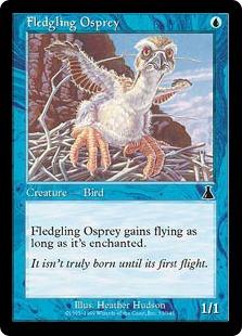 Fledgling Osprey [UD]