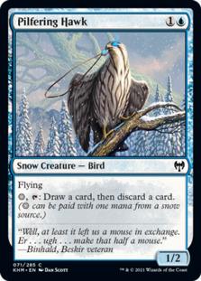 Pilfering Hawk