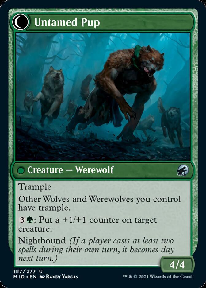 Untamed Pup [MID]